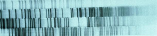 Genética y Nutrición: Por Moises Edid (Parte 1 de 2)