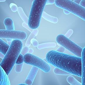 Probióticos en Paciente Crítico Por: GiovannaInostroza